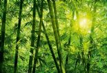 Wizard + Genius Wallpaper Wall Mural 00123 Bamboo Forest By Colemans